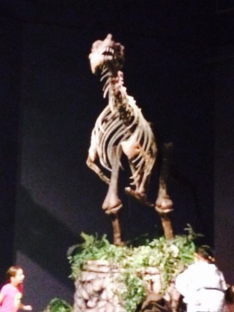 Orlando Science Center: The children participated in a treasure hunt by the dinosaur exhibits.