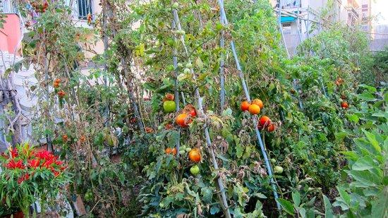 A Durmi: The vegetable garden