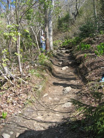 Stowe Mountain : This was going up one of the mountain trails.