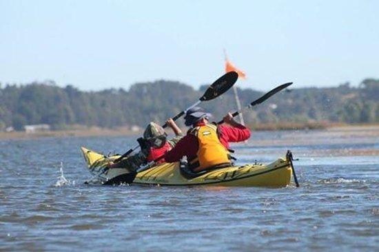 Puerto Saavedra, Chile: Tour en Kayak! Buenísimo