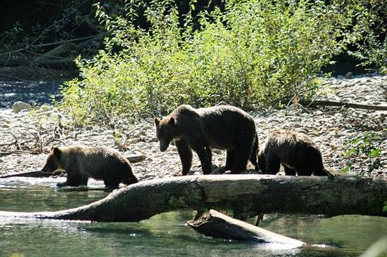 Campbell River Whale Watching and Adventure Tours: Mom and Cubs