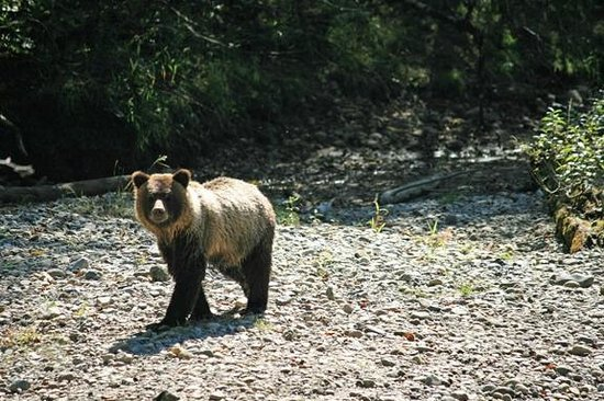Campbell River Whale Watching and Adventure Tours: Grizzly Cub