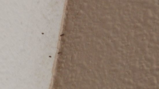 Candlewood Suites Lafayette River Ranch: bugs on ceiling