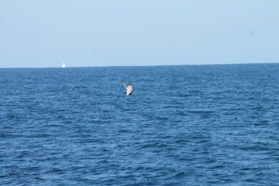 Sea World Whale Watch: whale tail