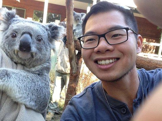 Kangarrific Tours: My selfie with one of the Koalas