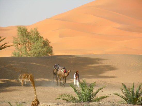 Hotel Kasbah Mohayut: camels