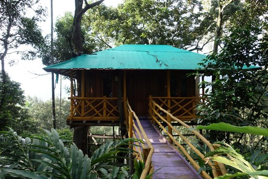 Tree House Picture Of Dream Catcher Plantation Resort