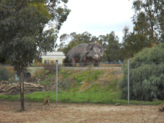 39 picture of cohunu koala park byford tripadvisor. Black Bedroom Furniture Sets. Home Design Ideas