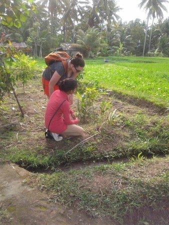 Ubud Botany Interactive