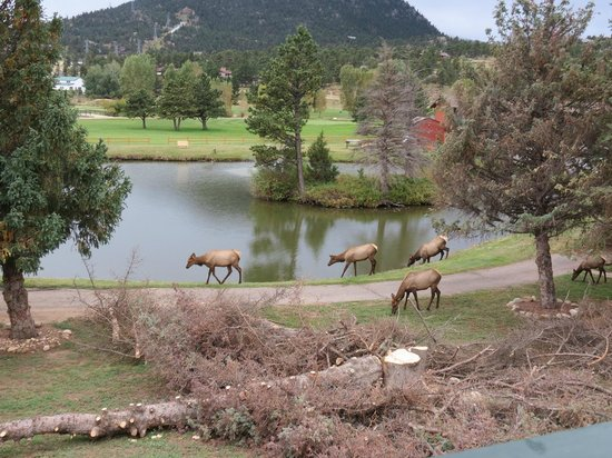 Discovery Lodge: elk seen from balcony