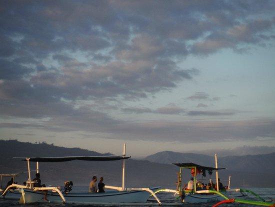 Lovina Beach: Dolphin Bothering