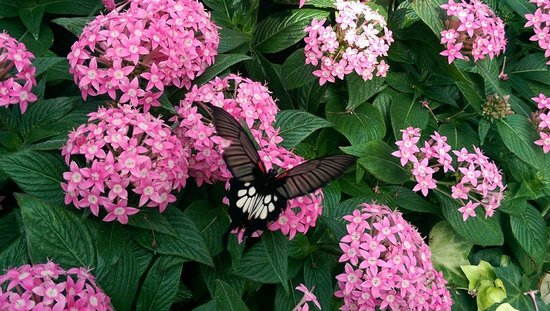 Wings of Mackinac Butterfly Conservatory: Beautiful Butterfly at Butterly Conservatory