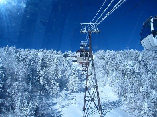 Palcall Tsumagoi Ski Resort : 樹氷が素晴らしいです。