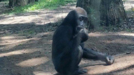 Zoo Atlanta: Loved the gorillas