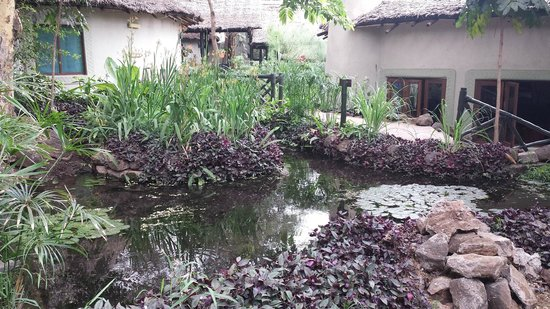 Lake Manyara Serena Lodge : Laghetto