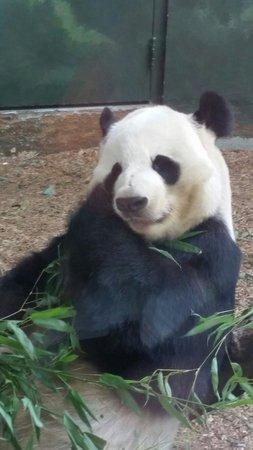 Zoo Atlanta: Too cute