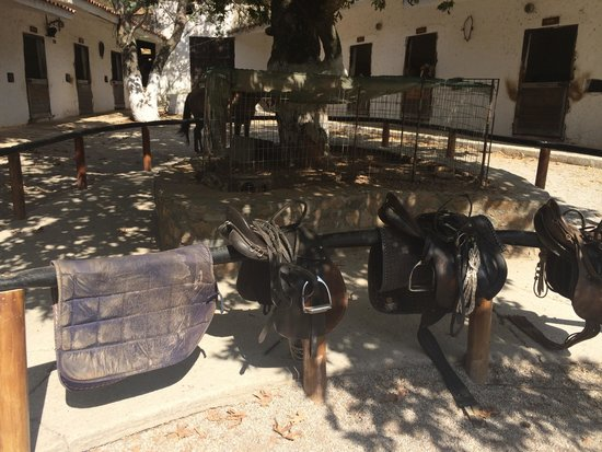 Platanias, Grecia: The saddles