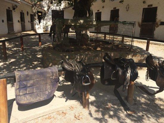 Deres Horse Riding Center : The saddles
