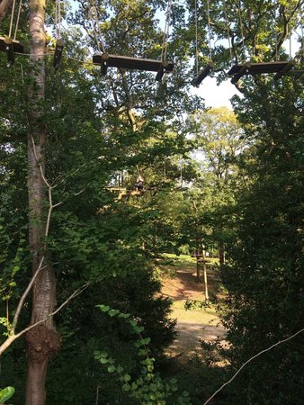 Treetop Trek: A view through the trees
