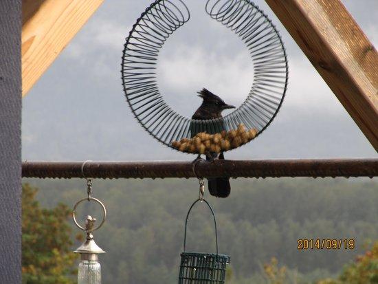 Riverview B&B: Birds