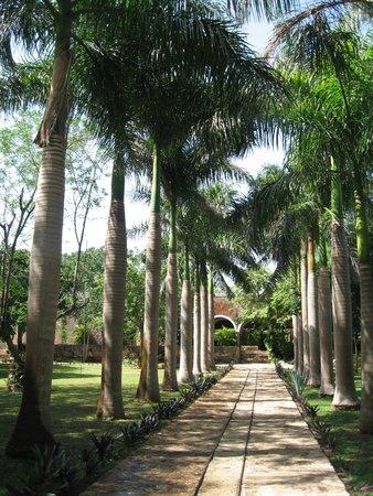 Hacienda Ochil: L'allée d'entrée bordée de palmiers