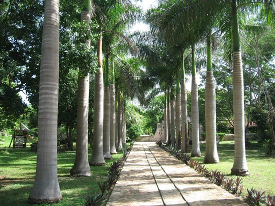 Hacienda Ochil: L'allée d'entrée avec sa voie ferrée