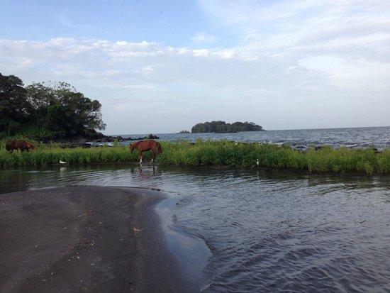 Finca San Juan de la Isla: Horses run freely on the beach