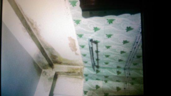 VJ City Hotel : schimmel im bad