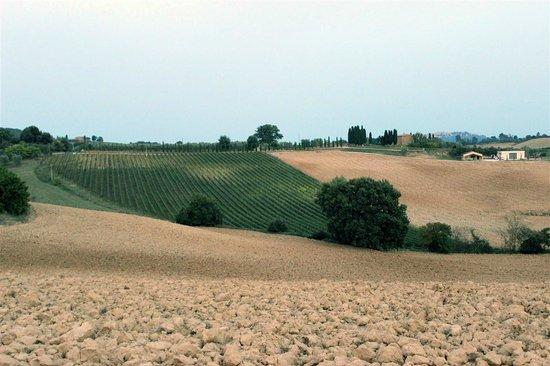 Agriturismo Santa Maria: paesaggio