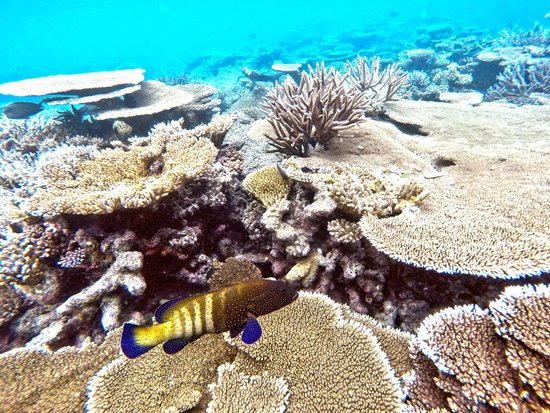Rangali Island: The reef