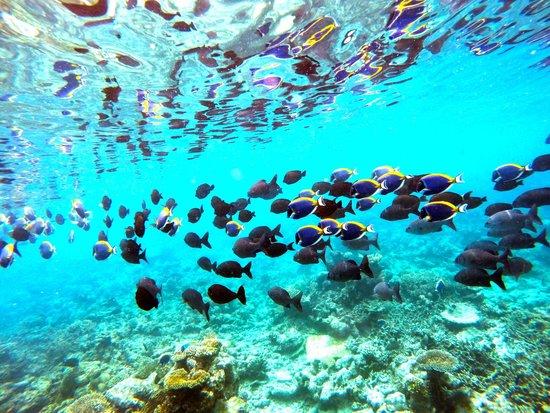 Rangali Island: Underwater