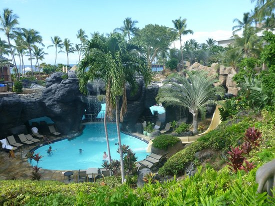 Resort On Big Island With Dolphins