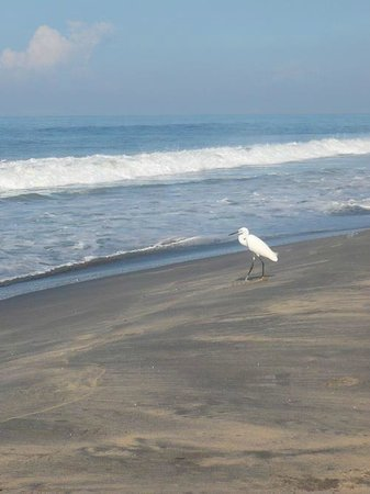 Good Karma Beach Resort照片