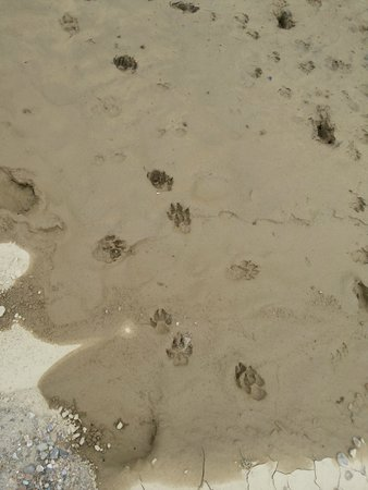 Maya The Forest Resort: Foot Mark of Animal Near bank of River
