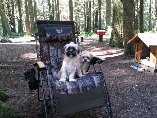 Maple Falls, WA: Our puppies loved this camp site.