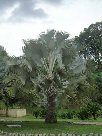 Perdana Botanical Garden: やはり南国の植物は違うと思いました。