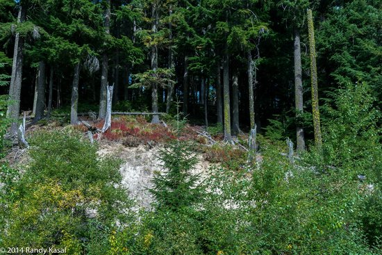 Mount Spokane: Woodland.