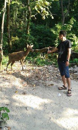 Pangandaran National Park: Cagar alam - Pangandaran