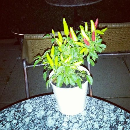 Alcatraz Caffe Poole: This is the chilli tree!!