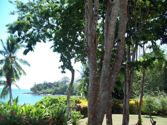 Casa Bambu Resort: View from porch of Casa Linda