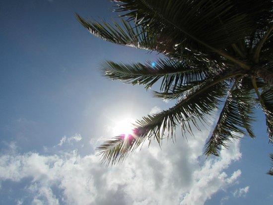 ريو أوكو ريوس أول إنكلوسيف: Sun