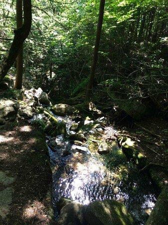 Shawnee Peak: Nice streams