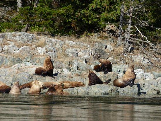 Hidden Harbour Vacation Rental and B&B: Wildlife Tour