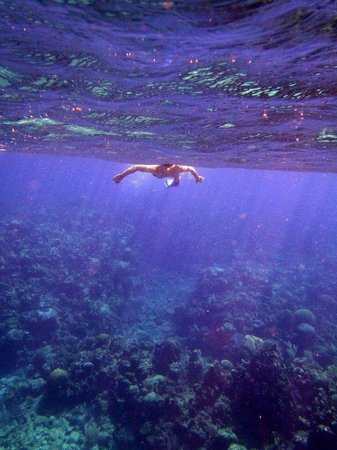 Snorkelling with coconut tree divers
