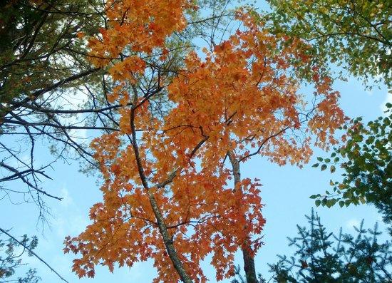 Tahquamenon Falls State Park: colorful trees