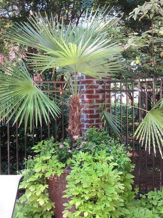 Holiday Inn Express Hotel & Suites Mt Pleasant-Charleston: Nice foliage & planters around pool area