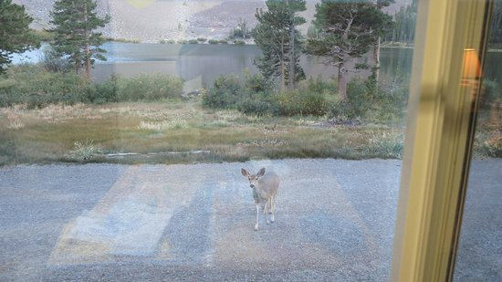 Virginia Lakes Resort: deer