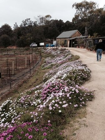 Kate's Berry Farm: Flowers year round