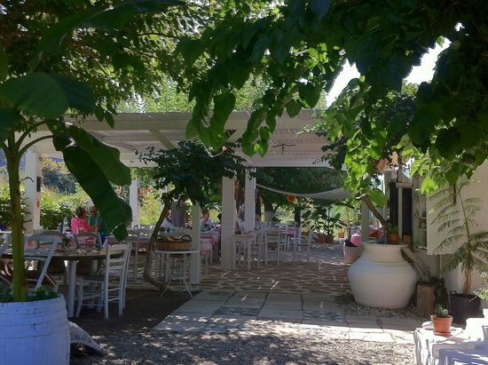 Hippy's : view of the garden