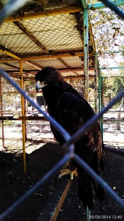 Baja Fun Adventures: the Beuatiful Eagle